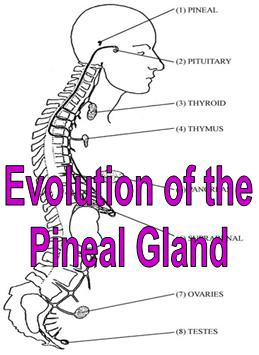Evolution of the Pineal Gland